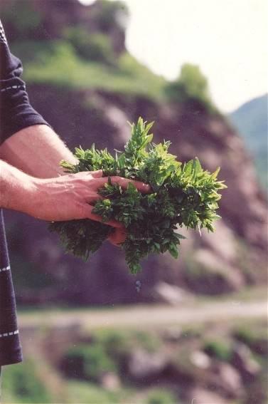 harvest4.jpg